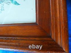 32x25 Under Glass, Drawing Board, T B State, Madagascar Cometa