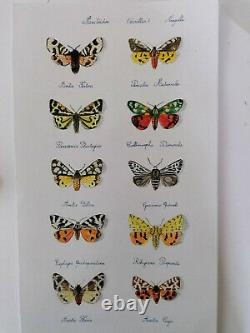 Beautiful Butterfly Drawing And Watercolor Plank