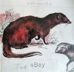 Board Color Drawings Original Watercolor René Hausman The Mangouste