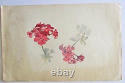 Engraving Drawing Watercolor Botanical Plank Early 20