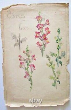 Original Watercolor Drawing Botanical Plank Beginning 20°