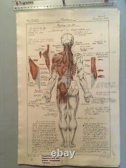 Dessin Original Planche Anatomique Corp Humain Curiosité Avant 1900 Crayon Encre