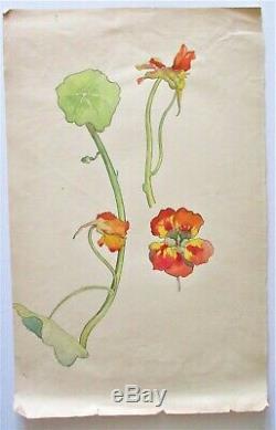 Gravure Dessin aquarelle planche botanique Début 20°