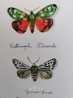 Magnifique planche de papillons dessin et aquarelle