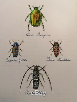 Magnifique planche de scarabées, dessin et aquarelle